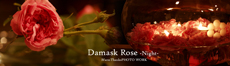 DamaskRose-Night-